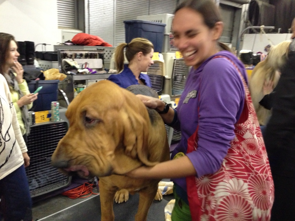 A Bloodhound Named Nathan bloodhound named Nathan